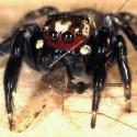 Araña contra la malaria