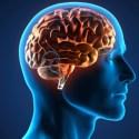 El dolor y el placer en el cerebro