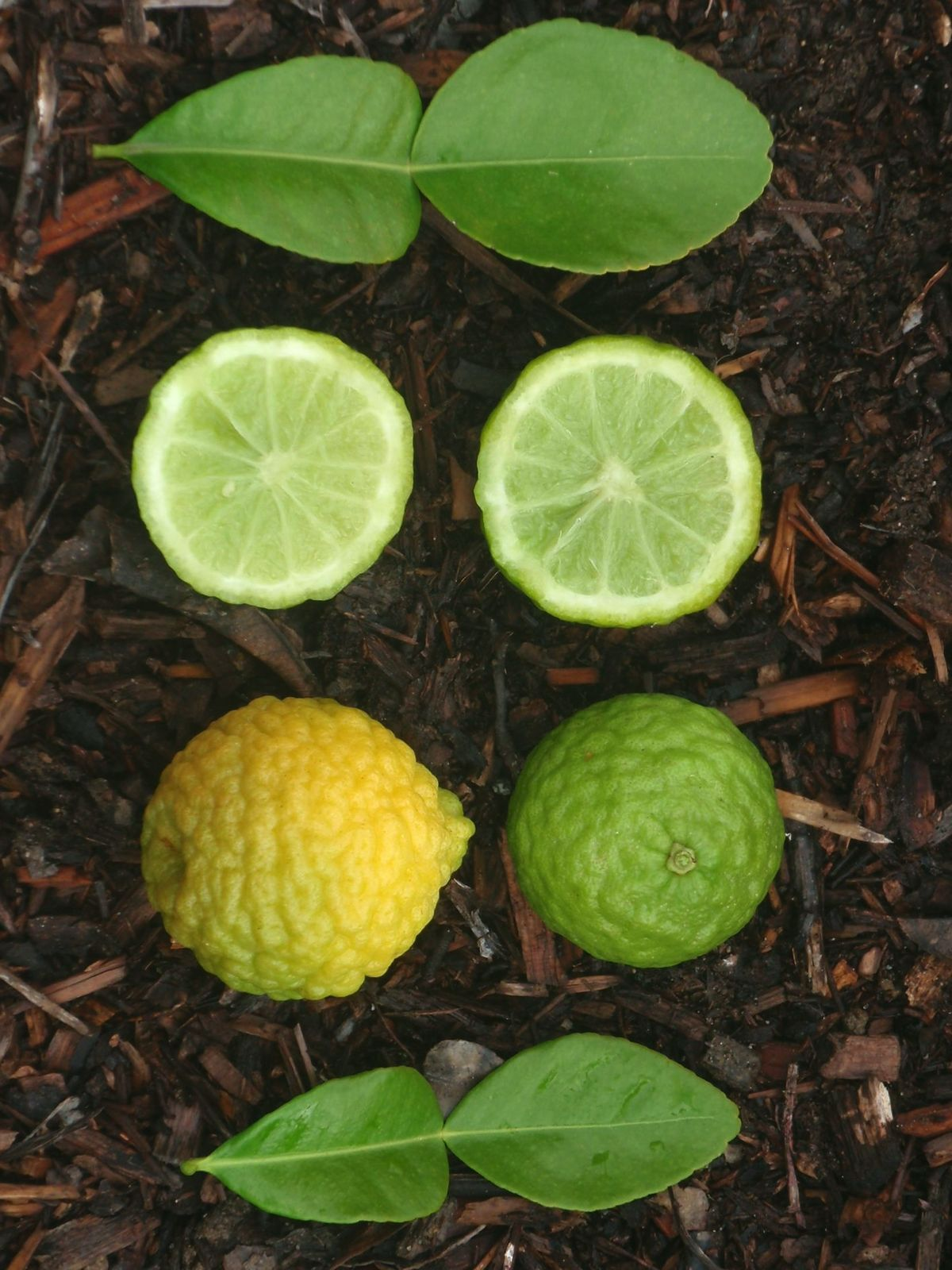 Fullsize Of Difference Between Lime And Lemon