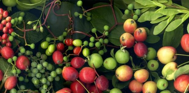Wallace Emerson Plants 2