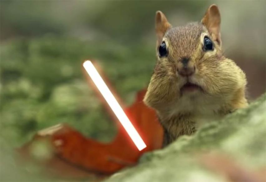 jedi chipmunks 1