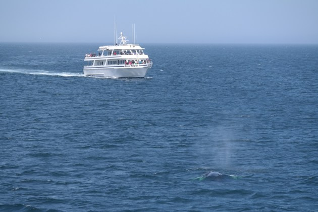 Boston Whale Watch