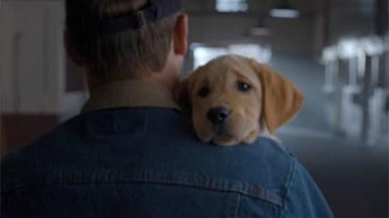 Budweiser y su spot Puppy Love, los primeros en el ranking de los más vistos