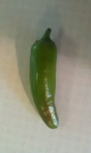 jalapeno pepper from garden