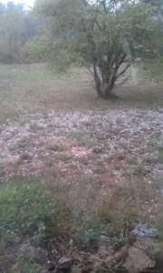 July 31, 2012 hail storm