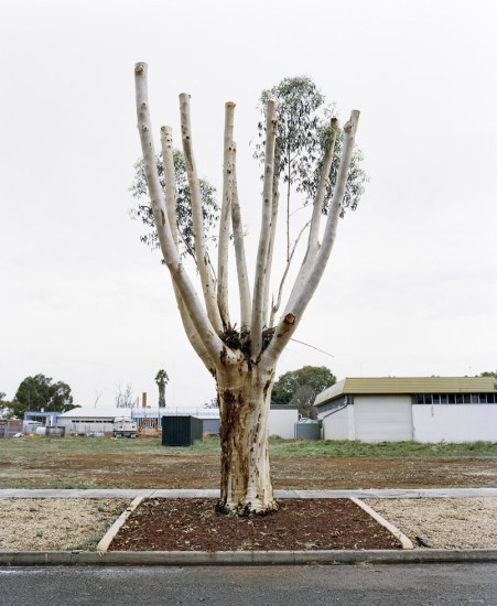 Amy Stein, Cut Down Tree IV, Balranald