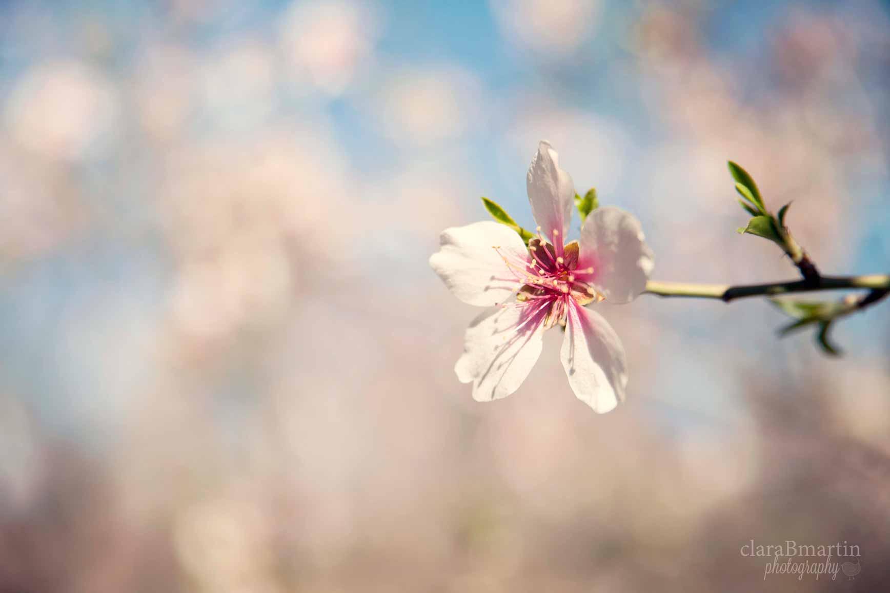 Primavera_claraBmartin05