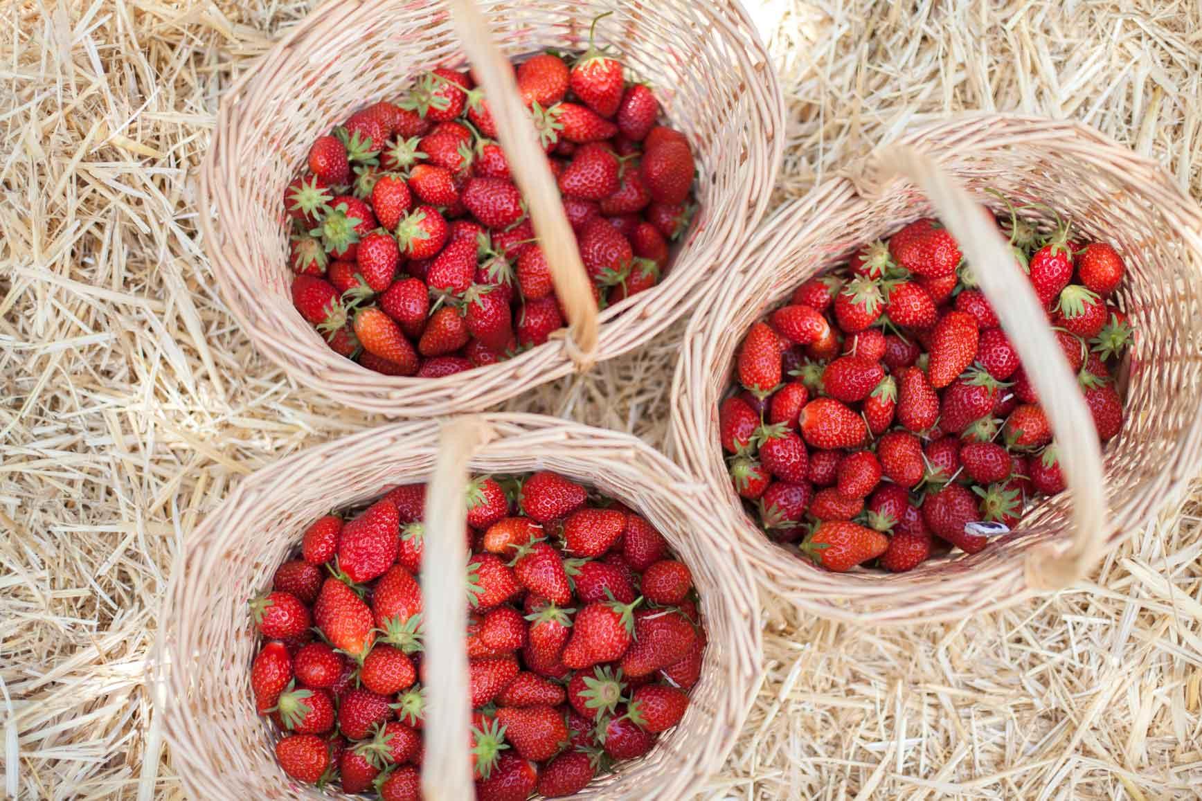 Recolecta-fresas-claraBmartin-16