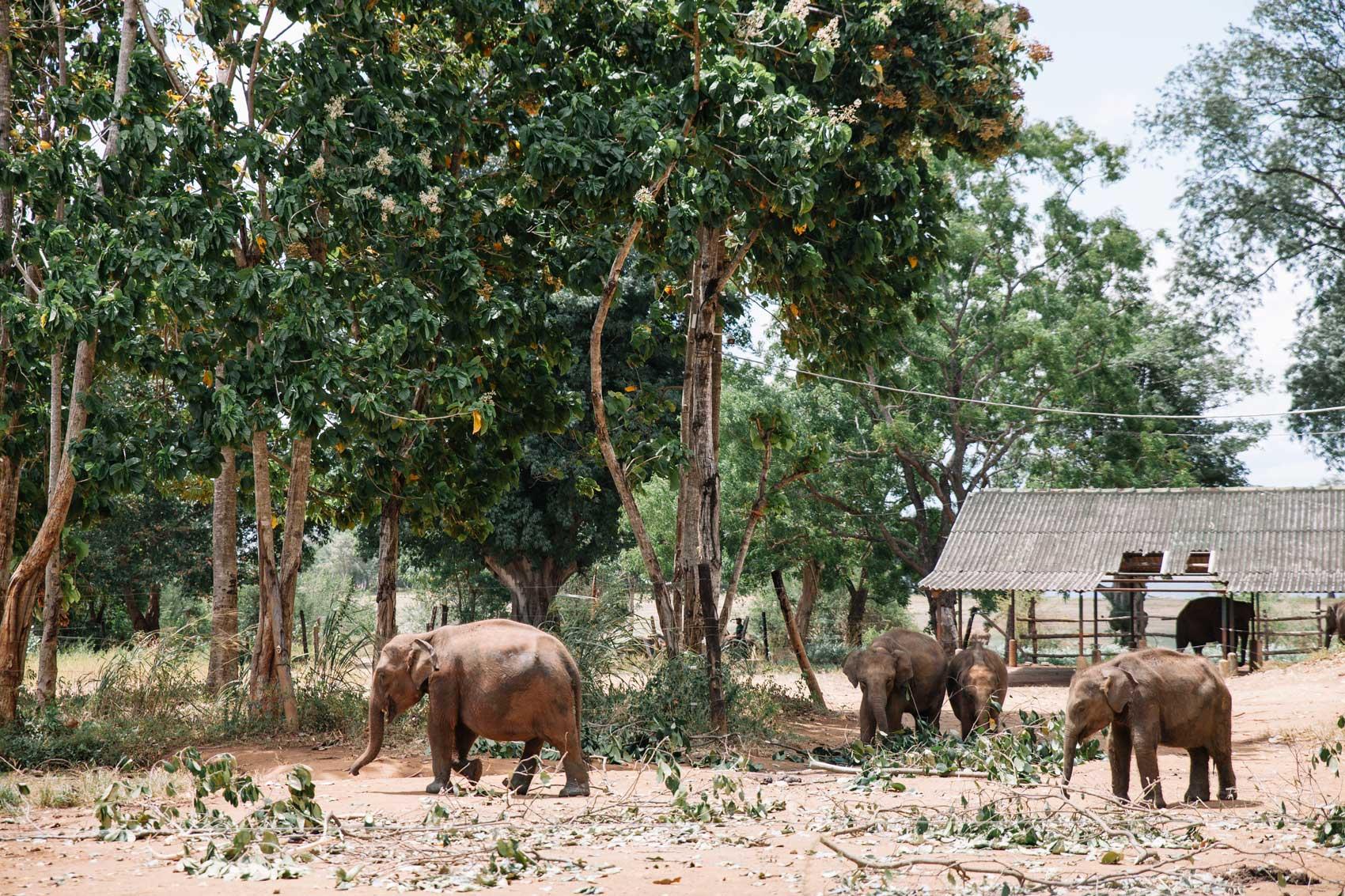 Sri-Lanka_504