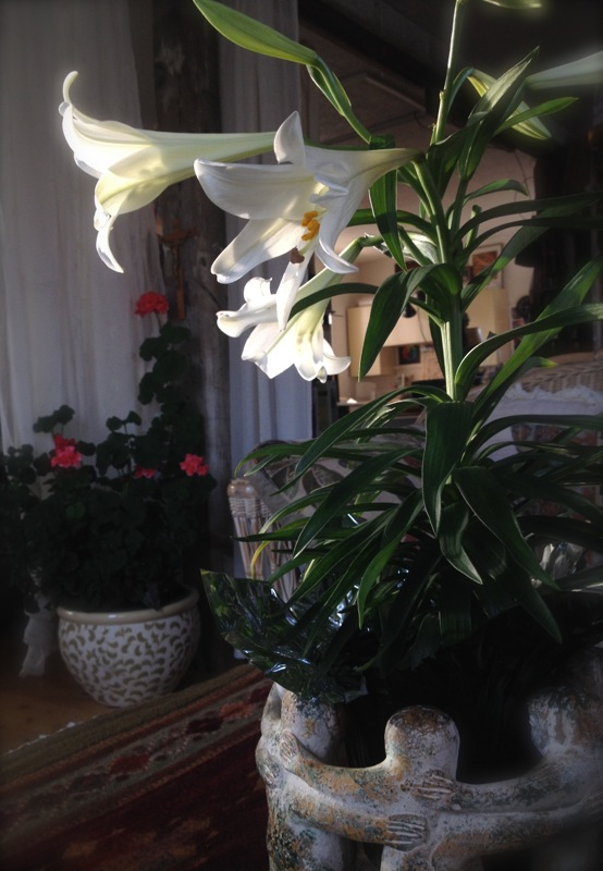 The sun sets upon the Easter lilies