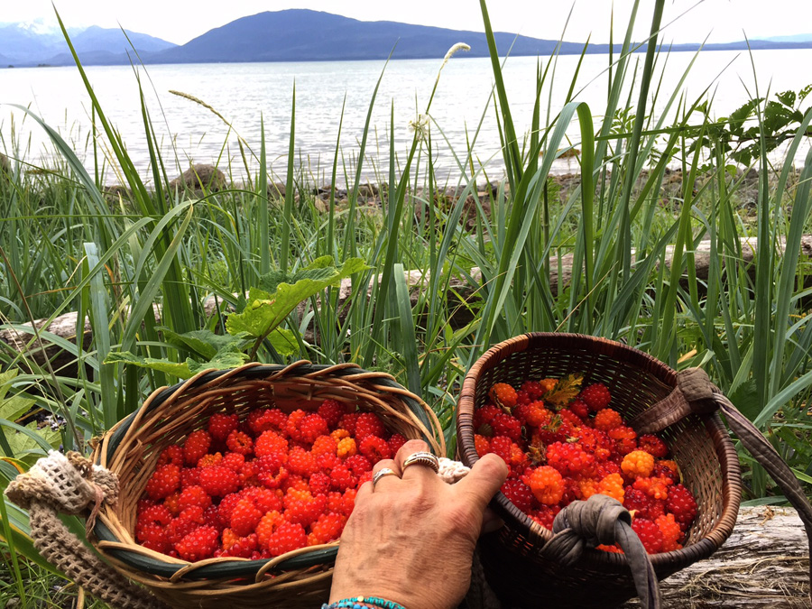 Fresh-picked salmon berries - Auke Bay, Alaska