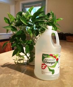 blog vinegar 2