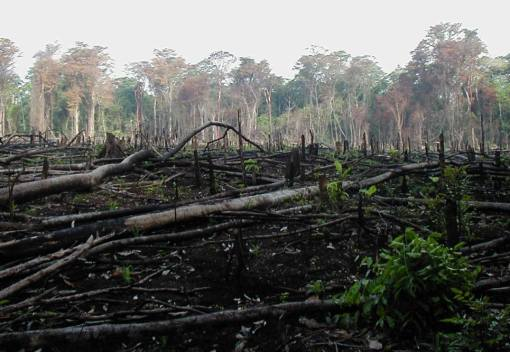 Earth has lost a Tenth of its Wilderness within the past 25 Years