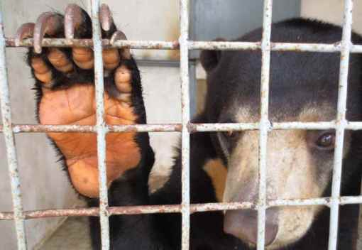 Two more Wildlife Sellers are Nabbed