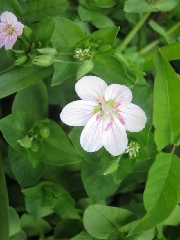 Flower - Wordless Wednesday