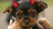No More Possessed Pooches!