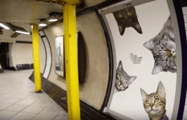 Tube Station Takeover… by Cats!