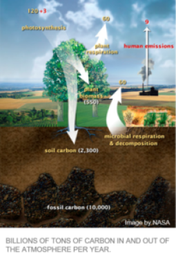 Carbon Cycle