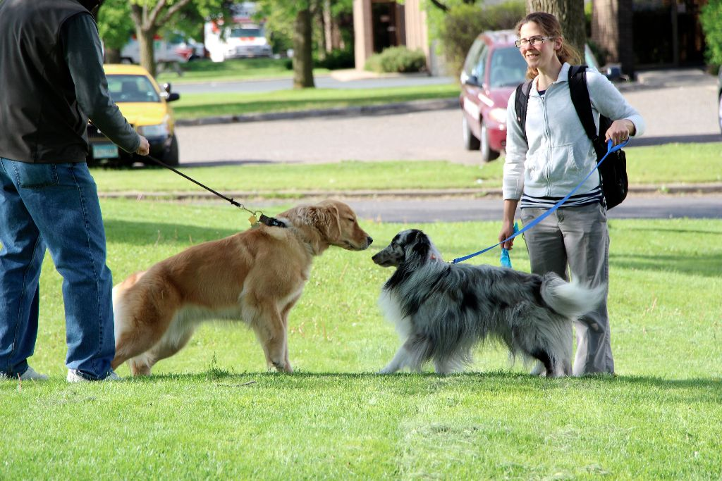 Dog Park Socializing: Is It For Every Dog?