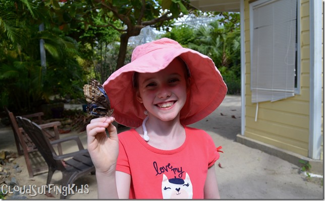 Charlotte Amalie Butterfly Garden Happiness