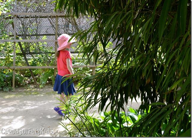 Charlotte Amalie Butterfly Garden Walking