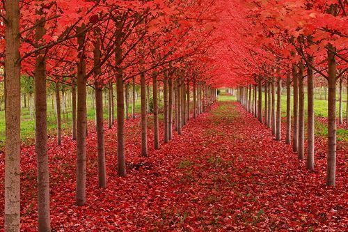 Under A Blood Red Sky, por Ian Sane