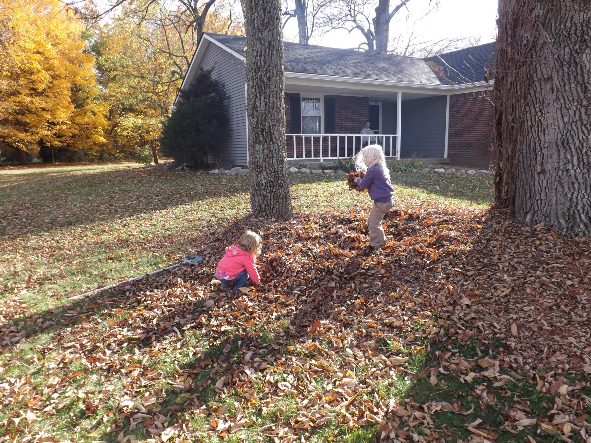 Leaf fight!!