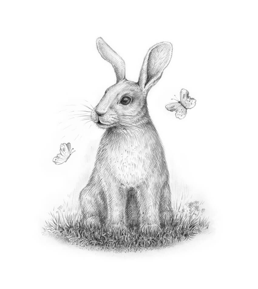 How to Draw a Rabbit Step by Step Final product image