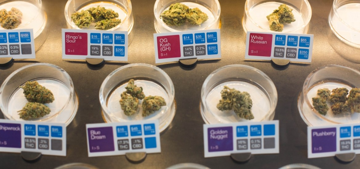 Cannabis buds with potency testing results on display at a dispensary. (Photo by Sonya Yruel/Drug Policy Alliance.)