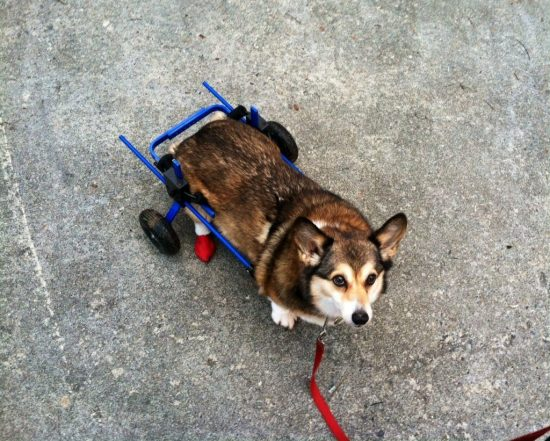 Agency Spotter Pup