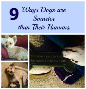 9 Ways Dogs are Smarter than Their Humans