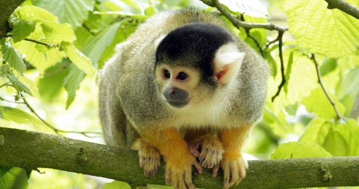 monkey-1321358_960_720