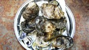 During our visit, Sprouse sampled the New Brunswick and Maryland Oysters.
