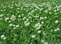 Weed Control Fairhope AL
