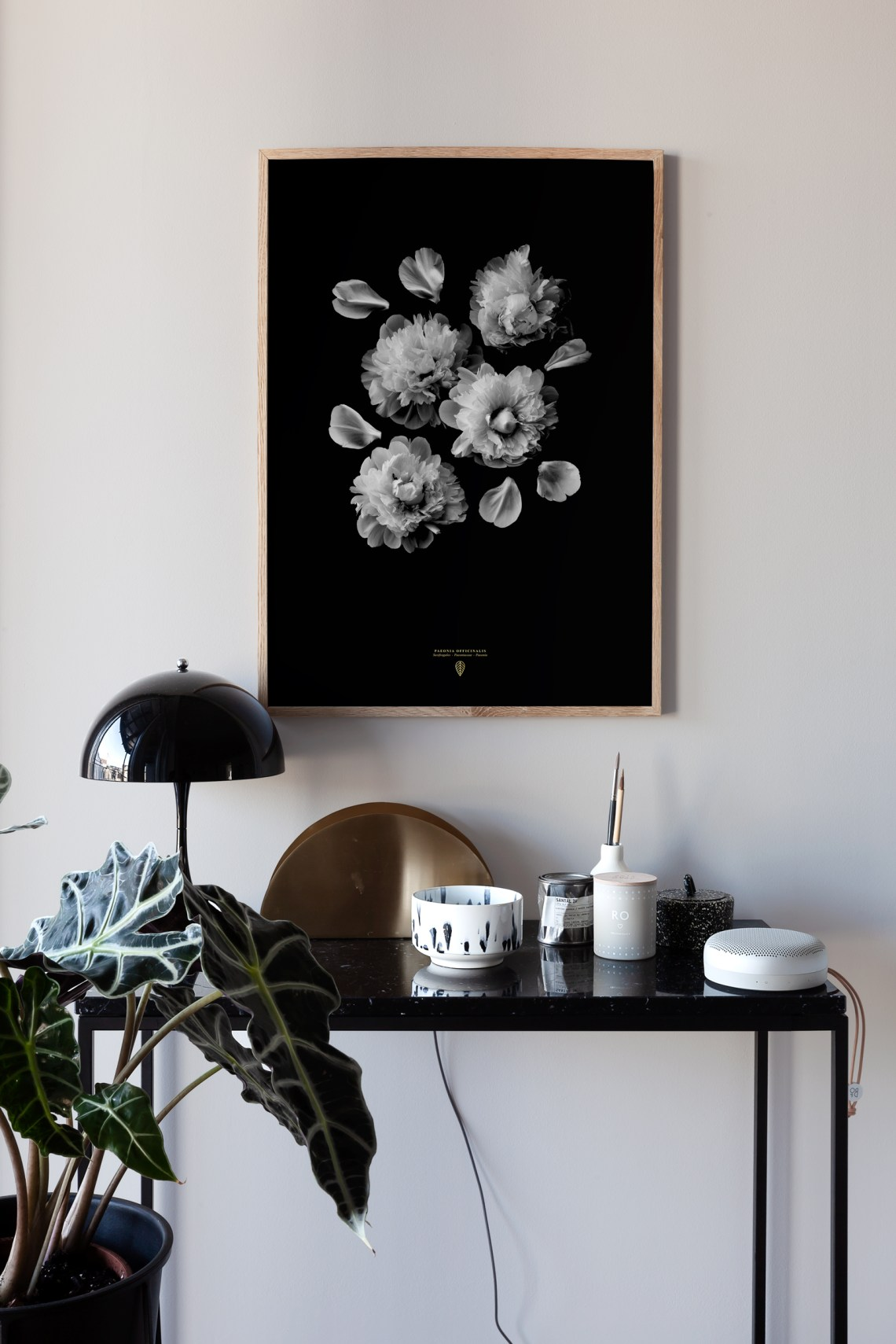Paeonia Officinalis art print