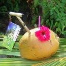 COCOTAP – Coconut opener