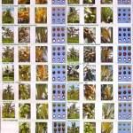 Fiji varieties - Poster
