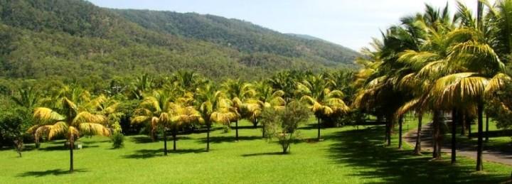 malay dwarf grove