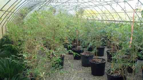 Dashing Sale Near Me Alphonse Karr Bamboo Sydney Alphonse Karr Bamboo Charleston Kiawah Sc Palm Trees 1 Alphonse Karr Bamboo