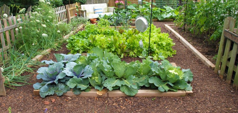 Cold Chain Quickie #15- 5-Star Hotels To Grow Veggies In Their Backyard