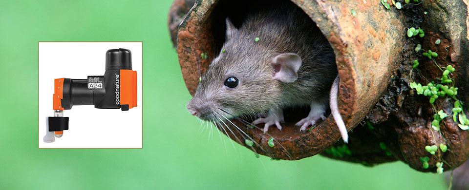Goodnature A24 Rat Trap