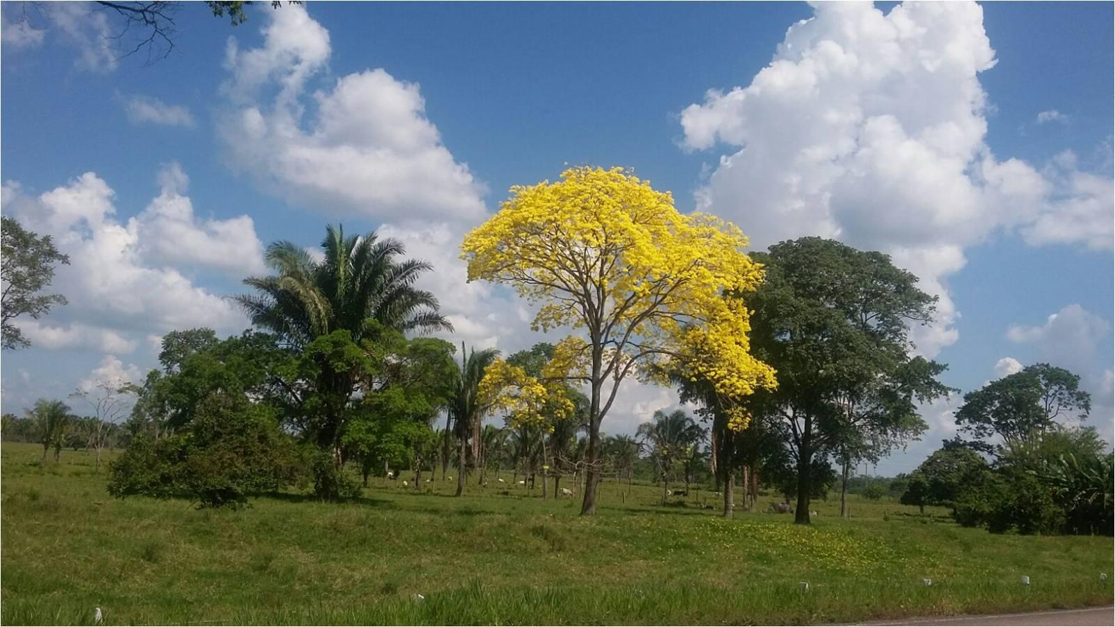 Paisaje de Arauca. Foto Guillermo Murcia, coordinador departamental de la CCCM