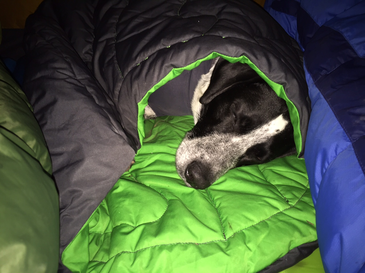 Posh Not Only Was This Combination It Humans To Sit While We Were Hanging Out At Landing Padis Durable Gear Ruffwear Sleep System Colorado Canine Acted As A Spot baby Dog Sleeping Bag