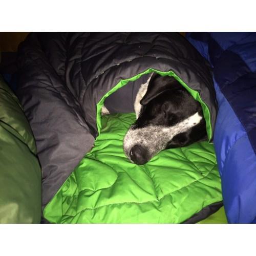 Medium Crop Of Dog Sleeping Bag