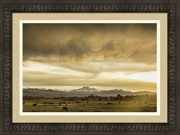 Colorado Grazing Framed Print