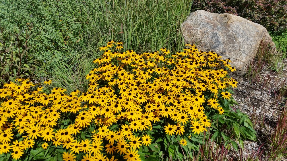 Does Fall Planting Work in Colorado?