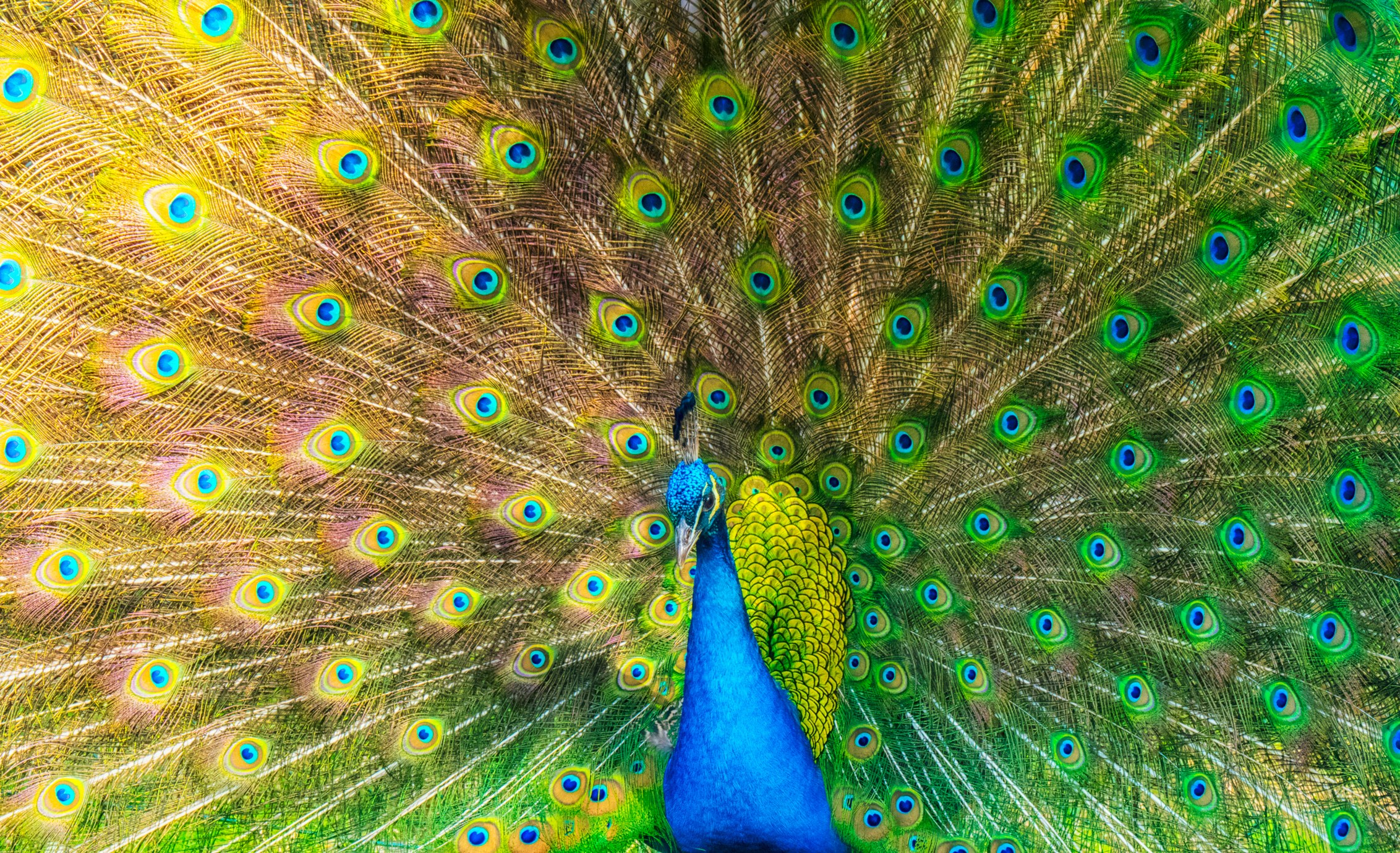 colour vision in animals colourchat