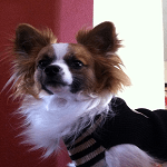 Fashion Friday: Ziggy's Classy Style