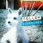 Blog Paws Blog Hop: Wordless Wednesday – @RawrSimba on Instagram