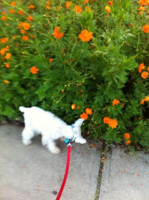 DogVacay.com - Dog Sitter - Dog Boarding